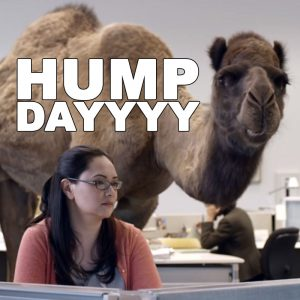 HUMP-DAY-CAMEL